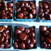 Braised Chestnuts