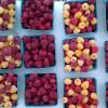 Raspberry Pecan Blondies