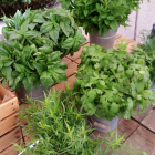 How to Properly Keep Your Fresh Herbs