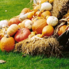 How to Extend the Life of Your Heirloom Pumpkin or Winter Squash