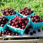 Cherry Pudding