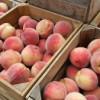 Peach Buckle