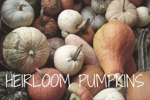 Website - Pumpkin Video