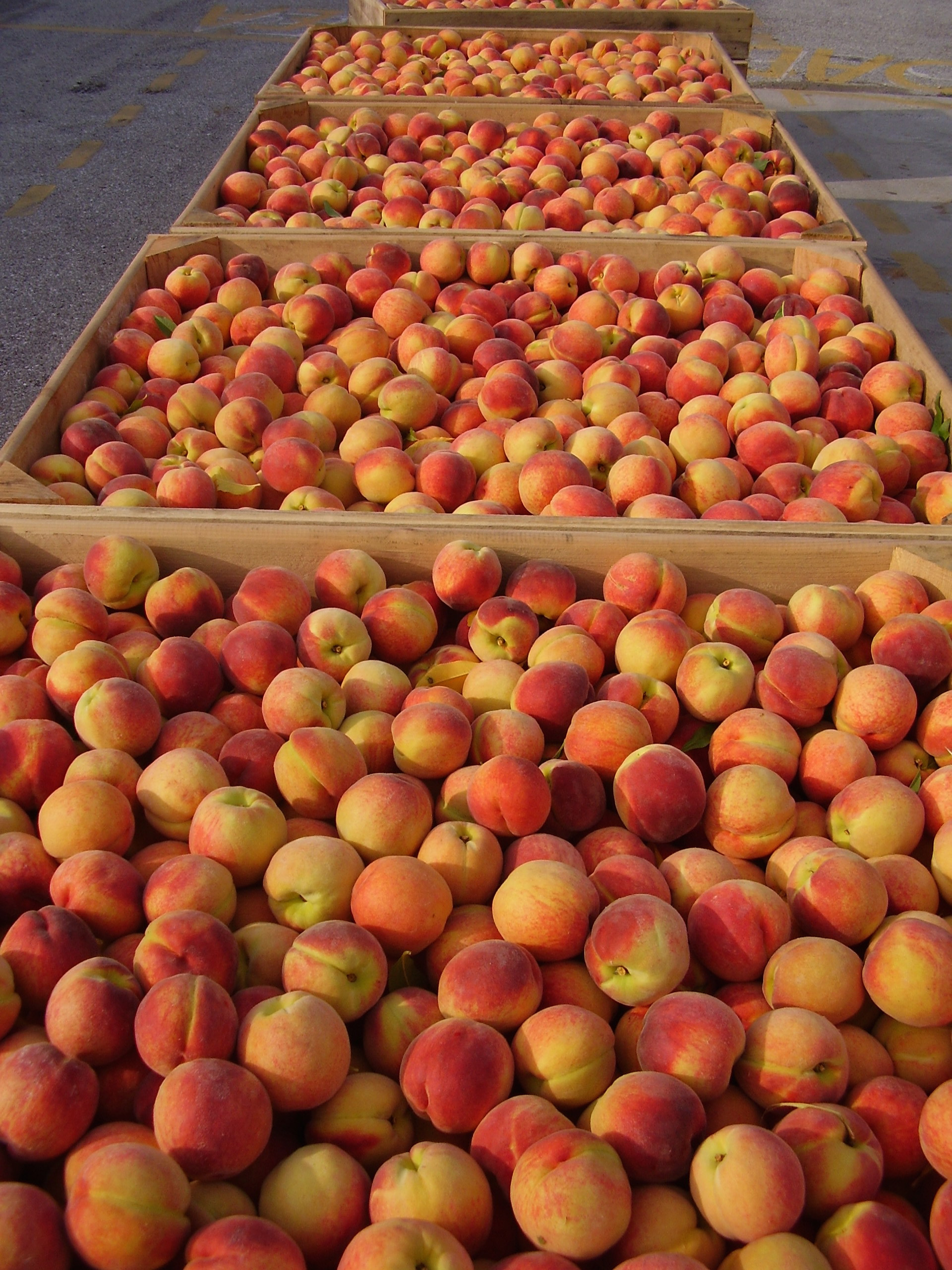 Cornmeal Loaf Cake with Nectarines or Peaches - Kuhn Orchards