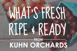 What's ripe at our Pennsylvania orchard