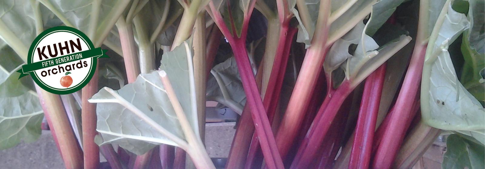 RhubarbLeaves