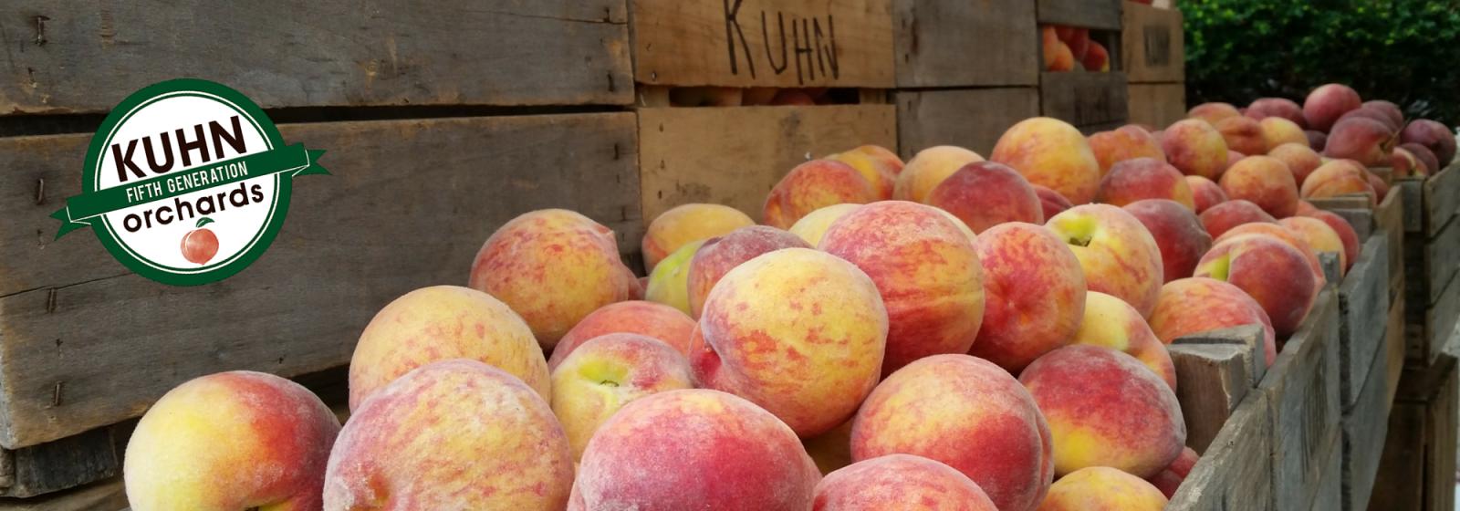 Peaches #KO